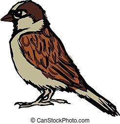 sparrow - hand drawn, sketch, cartoon illustration of...