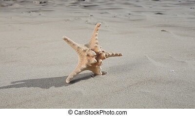 Starfish star on beach. Summer.