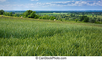 Meadows and fields on the Vistula