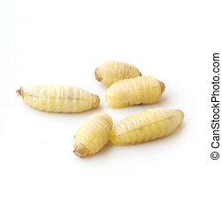 avispas, gusano