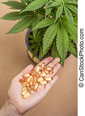 Cannabis and medicine - Cannabis plant and hand with...