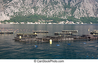 Aquaculture - An aquaculture farm on the sea