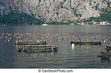 Aquaculture - An aquaculture farm on the sea