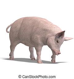 świnia, render