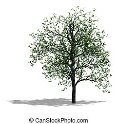 tree - rendering of a tree with shadow and lipping path over...
