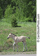 foal on green forests background