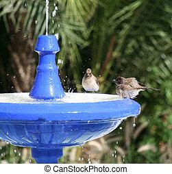 Bird bath - bird bath