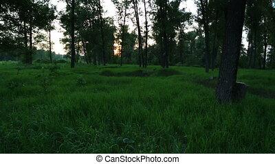 summer forest landscape at sunset - slider dolly shot