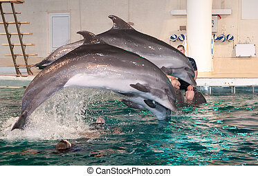 Dolphin show in the Dolphinarium - KLAIPEDA, LITHUANIA -...