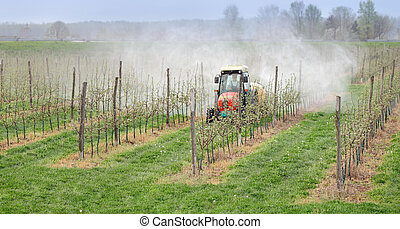 Agriculture, spraying of trees - Tractor sprays insecticide...