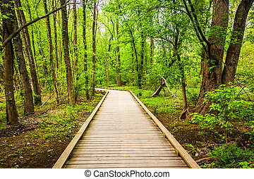 Boardwalk trail through the forest at Wildwood Park in...