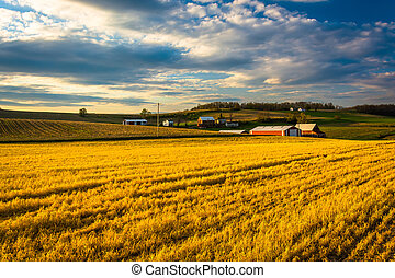 Evening light on farm fields in rural York County,...