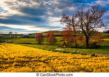 Colorful trees in a field in rural York County,...