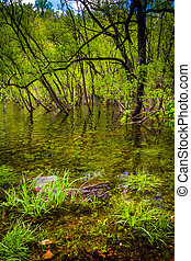 Flooding along the shore of Loch Raven Reservoir in Baltimore, M