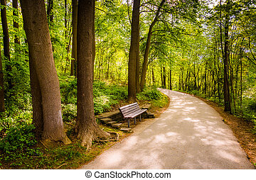 Bench along a path through the forest at Centennial Park in Colu