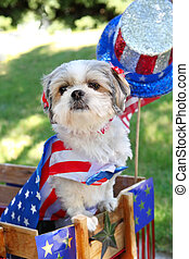 Dog dressed up for a 4th of July parade - a dog in a wagon...