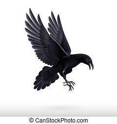 Black raven on white background - Illustration of flying...