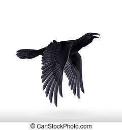 Black raven on white background - Flying black raven....