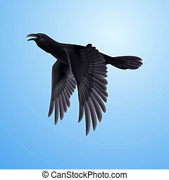 Black raven on blue background - Flying black raven on blue...