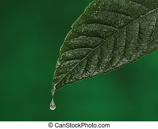 Green fresh leaf with a water drop falling.