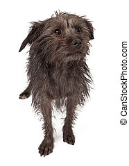 Shy Rescue Dog - A timid little terrier mixed breed dog with...