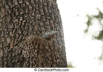 Varan auf dem Baum