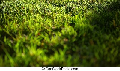 Green grass surface on the sunset. Video with shift, change in focus and bokeh