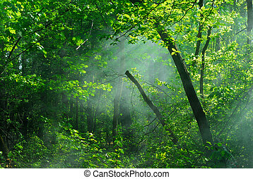 Green vegetative background , forest and sunbeams