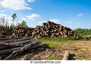 The cut and chopped fire wood are stacked in a heap