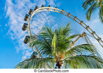 Palms and big ferris wheel - Green tropical palm tree with...
