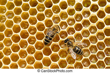 bees on honeycells - Close up view of the working bees on...