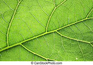leaf texture - an abstract background from leaf texture