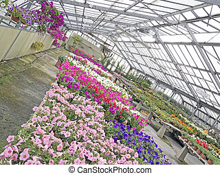 greenhouse with colored flowers view from different angle -...