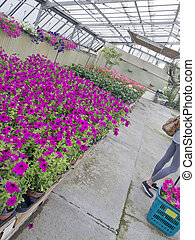 greenhouse with colored flowers and plants view from...