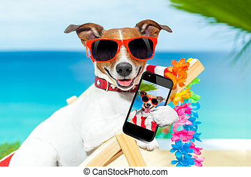 summer selfie dog - dog taking a selfie in summer holidays