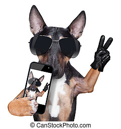 Bull Terrier DOG selfie - Bull Terrier taking a selfie with...