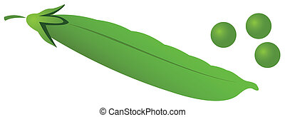 Pea pod - Illustration of a pea pod with peas on a white...