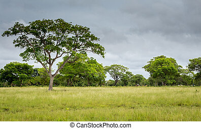 Landscape of the horse riding field,Pantanal
