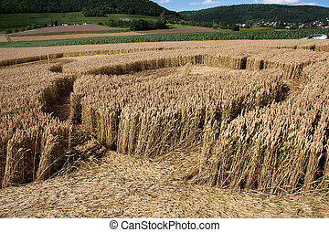 Inside of a crop circles, found in Schaffhausen,...