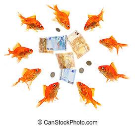 group of goldfish surrounding money - group of goldfish...