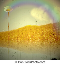 Idyllic landscape retro daisy and rainbow on the field