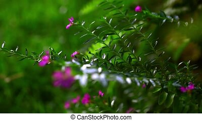 Beautiful small pink flowers. Macro video with shift