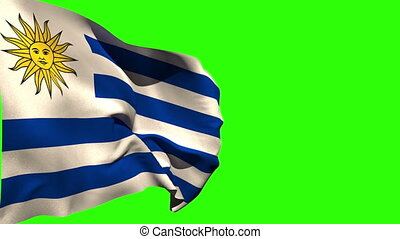Large uruguay national flag blowing on green screen...