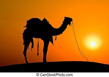 Silhouette camel at sunset on the dunes of the Thar desert....