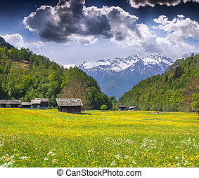 Alpine meadows near the village of Bondo. Alps, Switzerland....