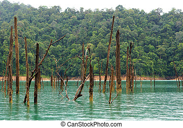 Dead trees at tropical rainforest, Kenyir Lake in...