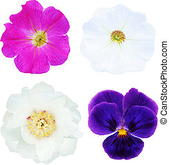 Flower Set - 4 Flowers, With Gradient Mesh, Isolated On...