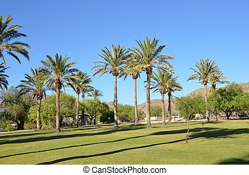 Desert Oasis - An oasis in the desert with green grass,...