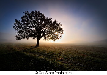 lonely tree on field at dawn - lonely tree on field on foggy...