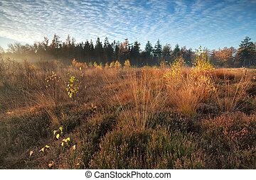 oro, otoño, mañana, pantano